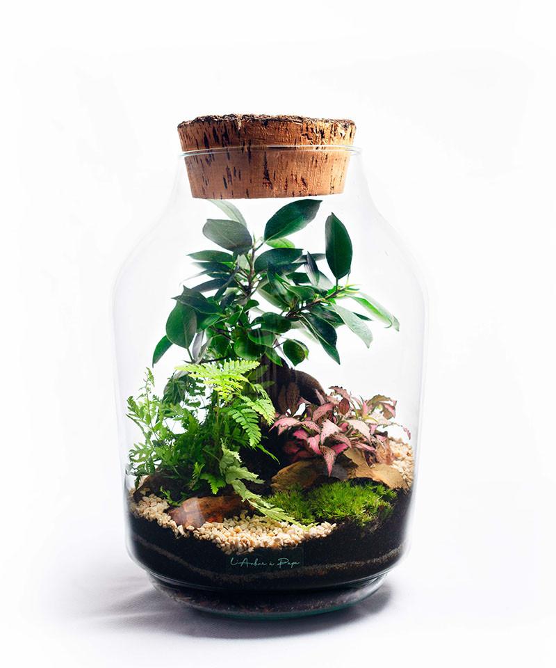 Terrarium avec bouchon de liège, ficus Ginseng, Fougère, Fittonia