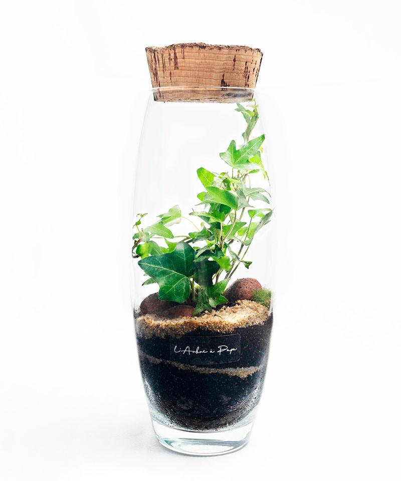 Terrarium petit modèle, lierre, bouchon de liège