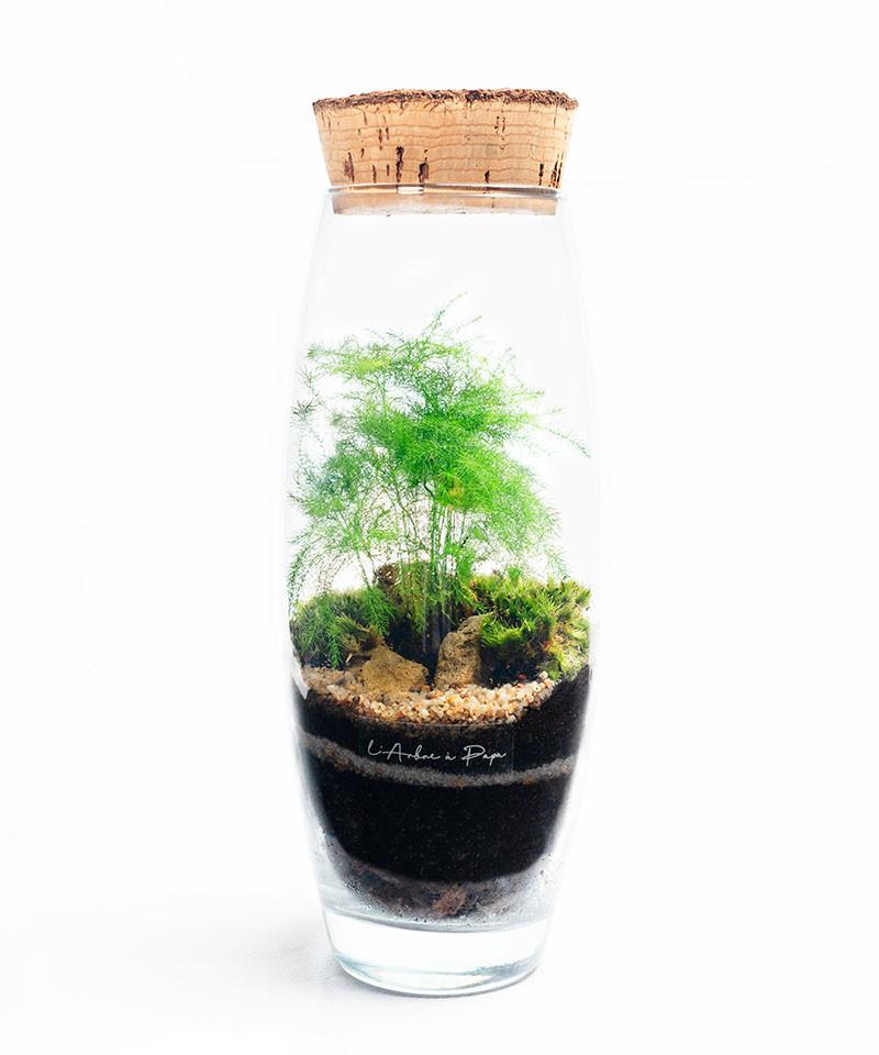 Terrarium petit modèle, asparagus plumosus, bouchon de liège