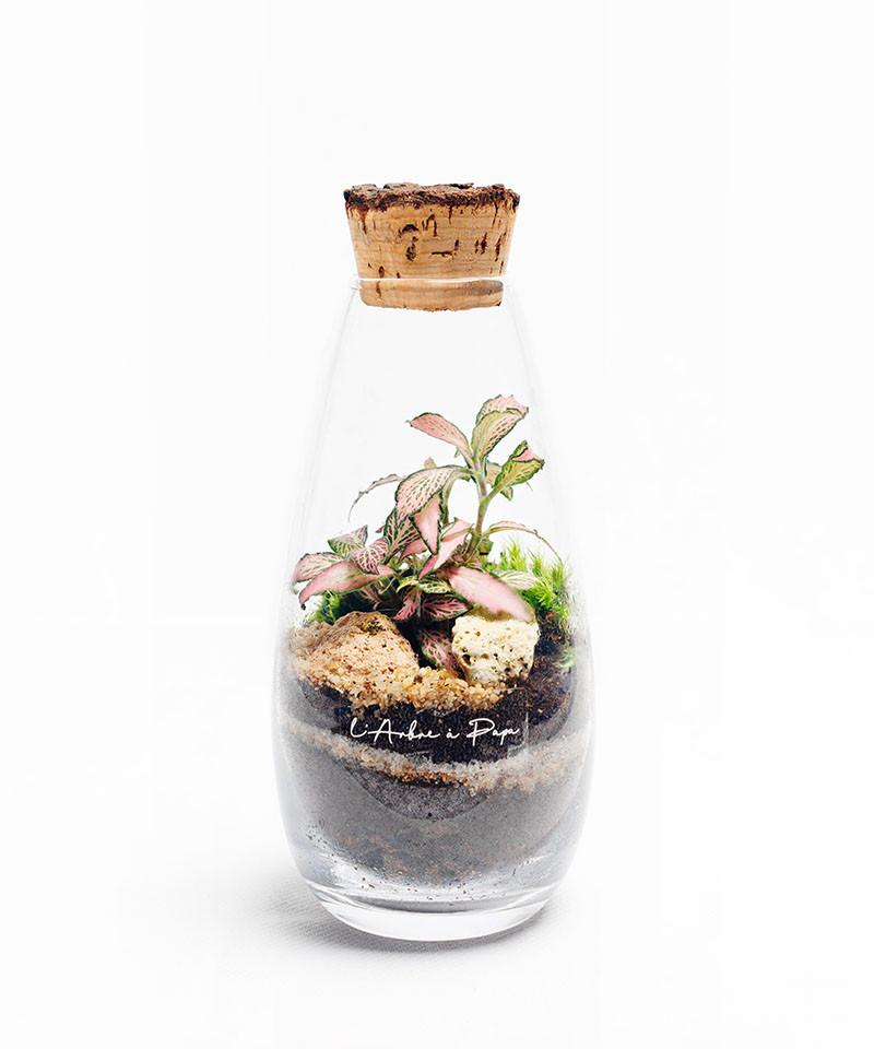 Terrarium, Modèle mini, Fittonia
