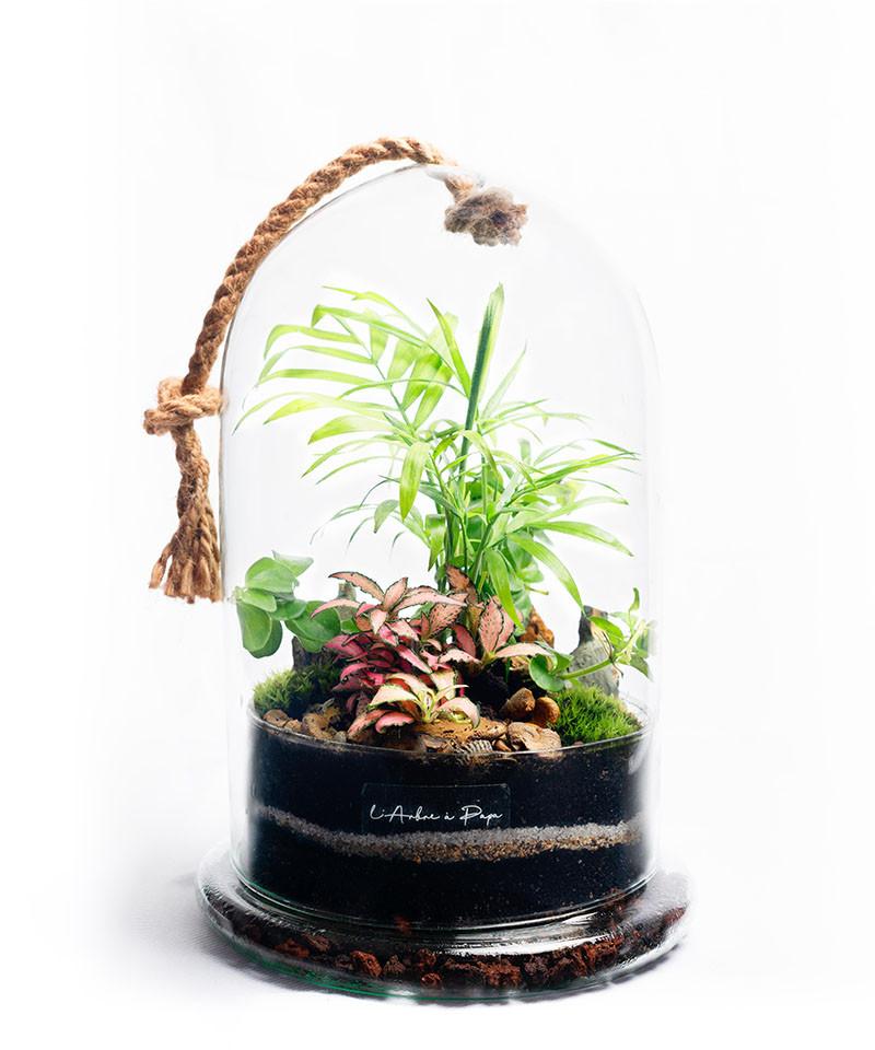 Terrarium modèle cloche, Chamaedorea Elegans, Fittonia