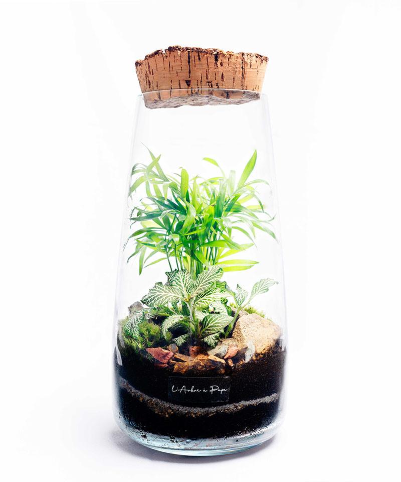 Terrarium moyen modèle, Chamaedorea, Fittonia, bouchon de liège