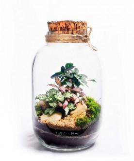 Terrarium avec bouchon de liège, Ficus Ginseng, Fittonia