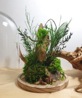 TIKAL - Cloche végétaux...