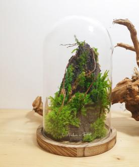 DAINTREE - Cloche végétaux...