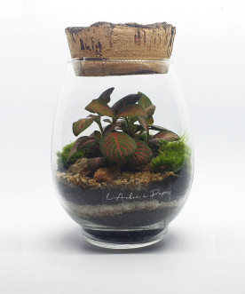 CÔME - Terrarium modèle...